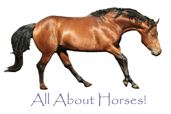 wild horse legends and horse toys childrenu002639s books about horses about horses 600x400