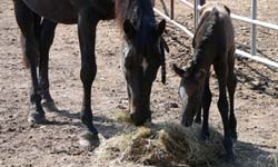 Faith's new filly, May 2005