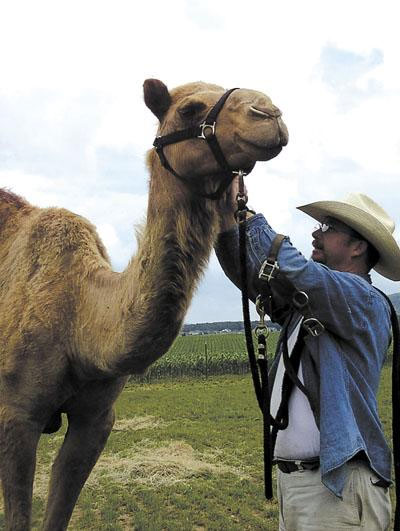 Doug Baum, VisionQuest's livestock coordinator for camels, has traveled from Texas with two camels he says help youth develop problem-solving skills.